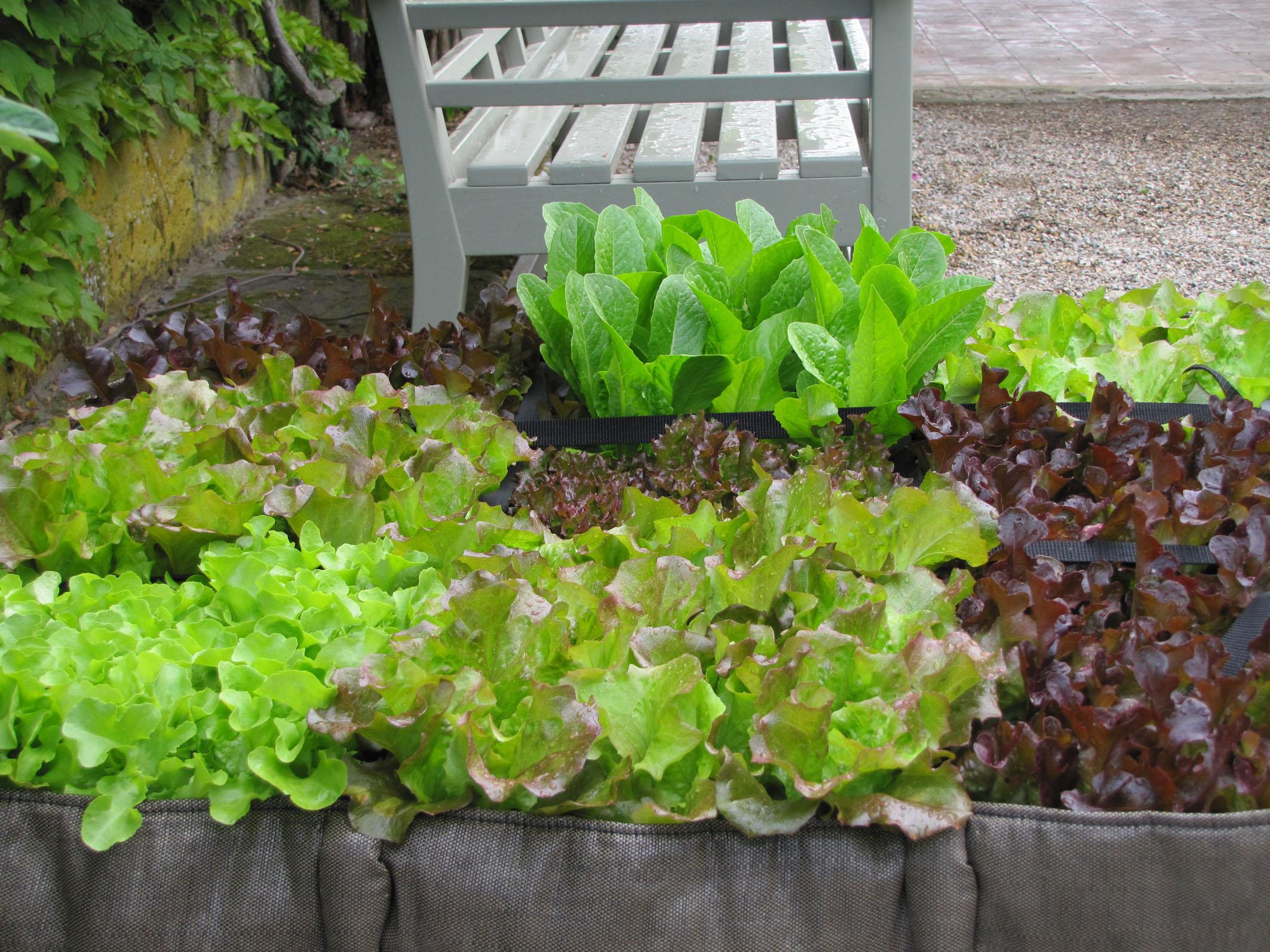 Garten und Gabel Salat