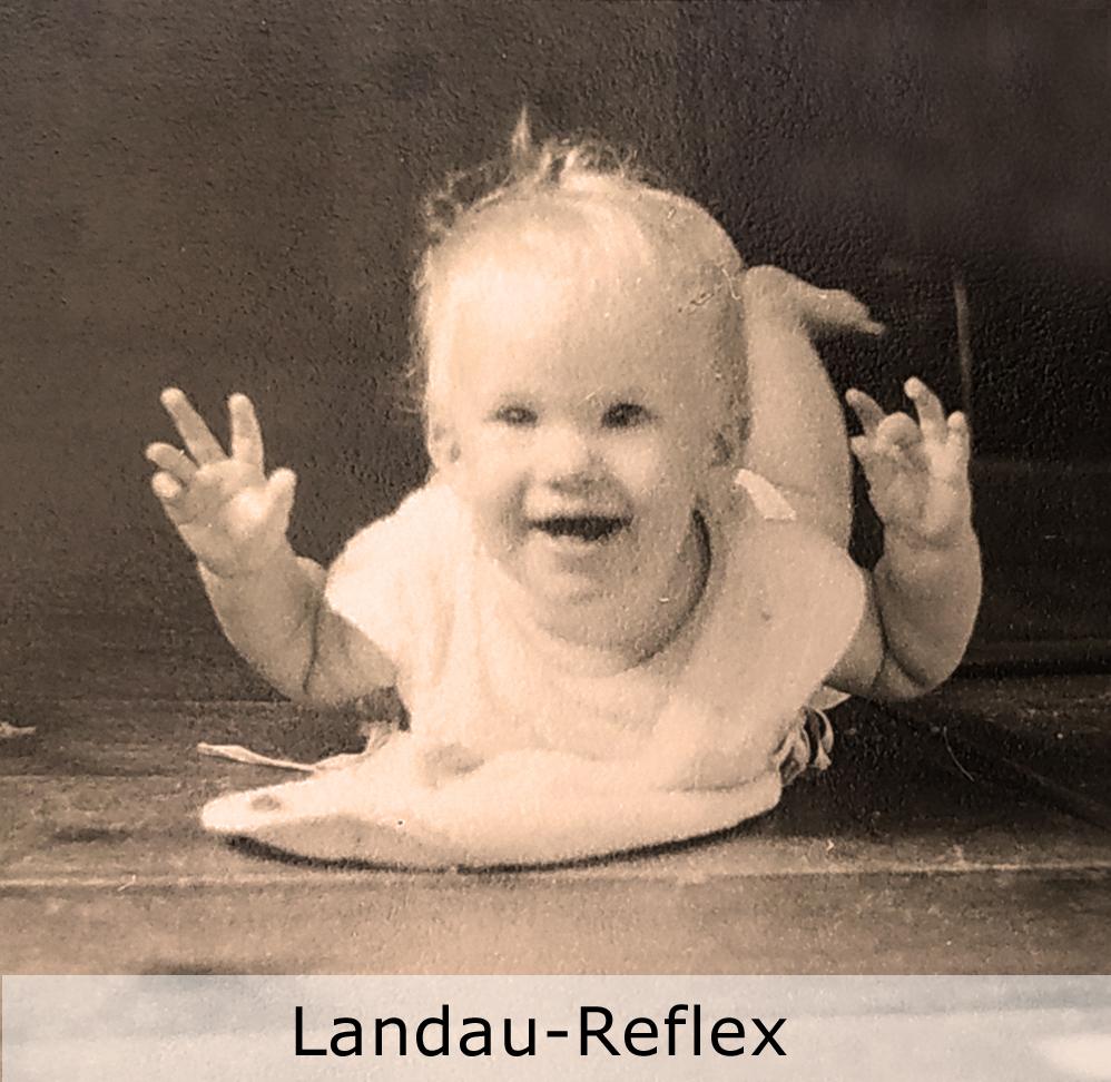 landaureflex txt